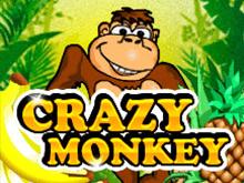Играйте в онлайн слоты Сумасшедшая Обезьянка